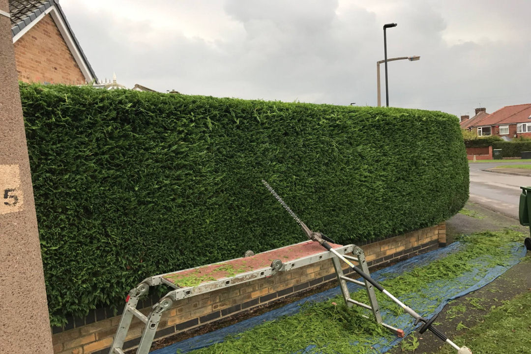 Fife Hedge Trimming