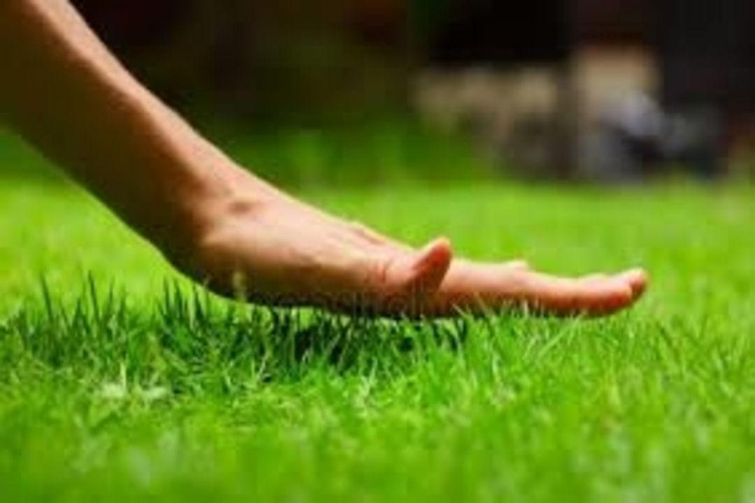 Fife lawn care