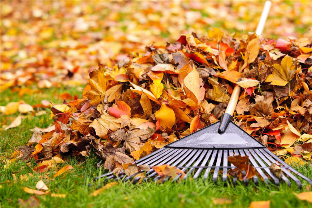 Fife Leaf Clearance