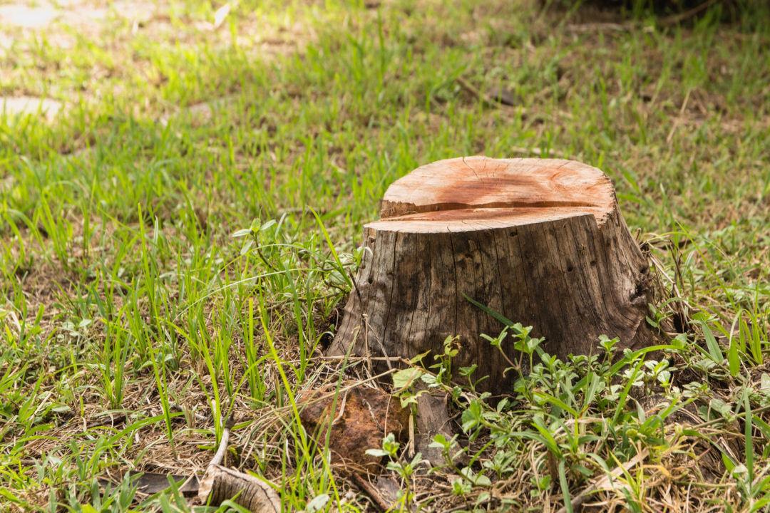 Stump Removal Fife