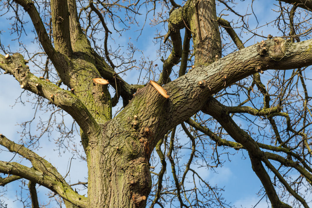 Fife Tree Surgery / Tree Pruning
