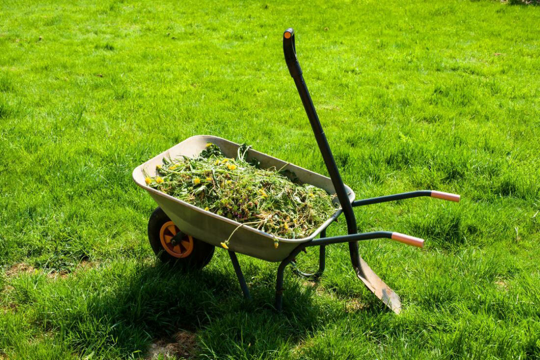 Weed removal Fife